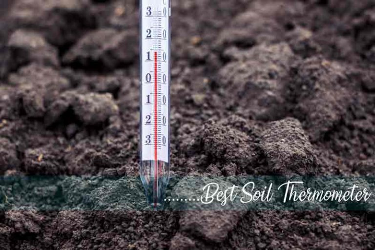 Best Soil Thermometer