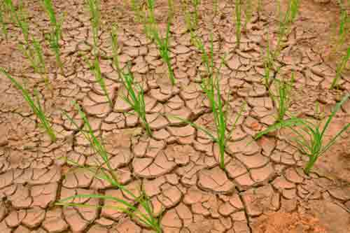 How to Prevent Erosion in Your Farmland?