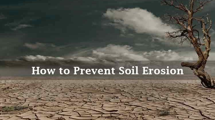 How to Prevent Soil Erosion