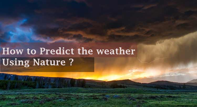 How to Predict the weather Using Nature